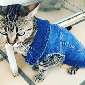 colete pet jeans | liz taylor for cats | coleteria in the city