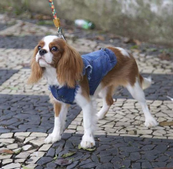 colete pet jeans | liz taylor for dogs | coleteria in the city